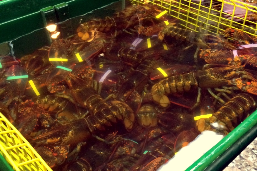 lobster thurstons